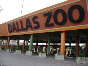 The Dallas Zoo 51 Fun Things to do in Dallas Texas