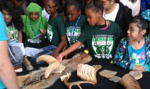 Children learning about animal artifacts at the Perot Museum.